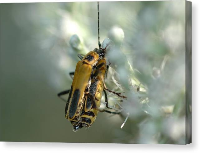Insects Canvas Print featuring the photograph Bugz In Spring by BS Garvin
