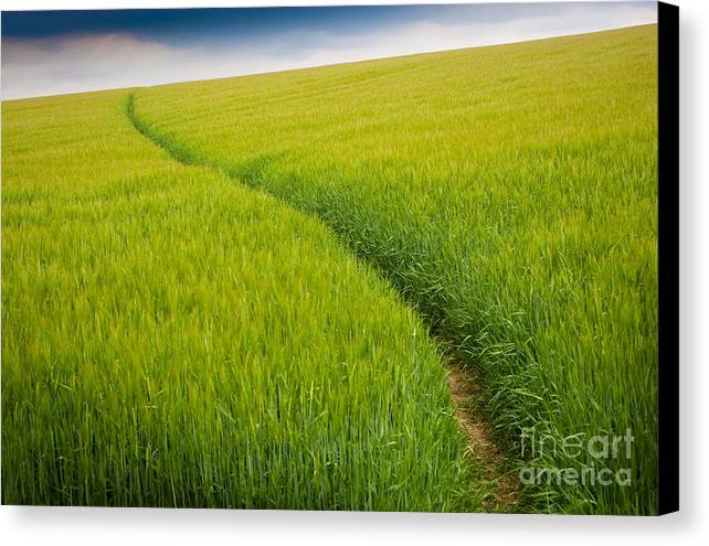 Photograph Canvas Print featuring the photograph Green Field by Michael Hudson