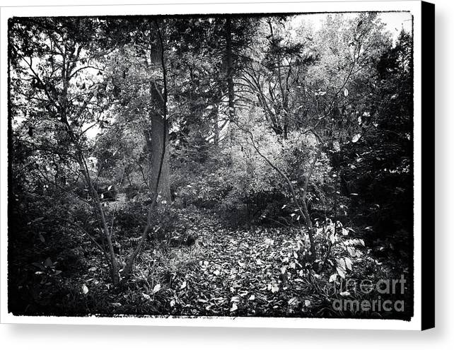 Into The Forest Canvas Print featuring the photograph Into The Forest by John Rizzuto