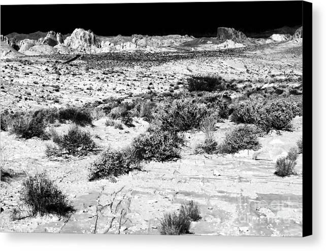 Desert Daze Canvas Print featuring the photograph Desert Daze by John Rizzuto