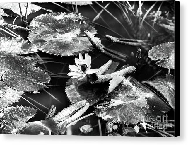 Texas Lily Pond Canvas Print featuring the photograph Texas Lily Pond by John Rizzuto