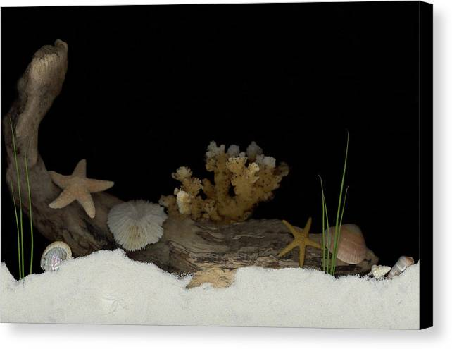 Shells Canvas Print featuring the mixed media Down Under by Sandi F Hutchins