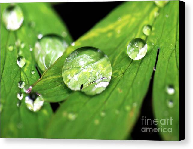 Macro Canvas Print featuring the photograph Raindrop by John Rizzuto