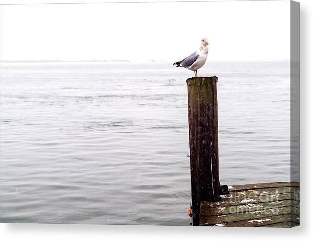 Winter Seagull On Long Beach Island Canvas Print featuring the photograph Winter Seagull On Long Beach Island by John Rizzuto