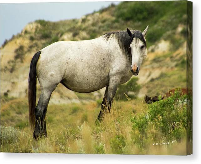 Wild Horse Canvas Print featuring the photograph Wild Horse by Kyle Krosting