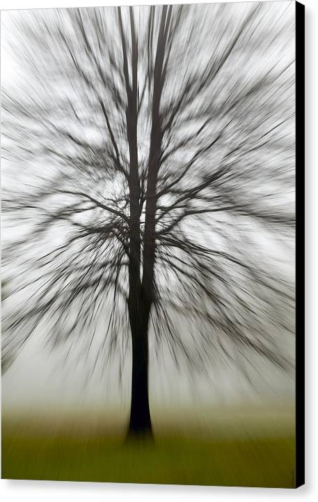 Art Canvas Print featuring the photograph Bare Tree Zoom Fine Art Photograph by Neil Molinaro