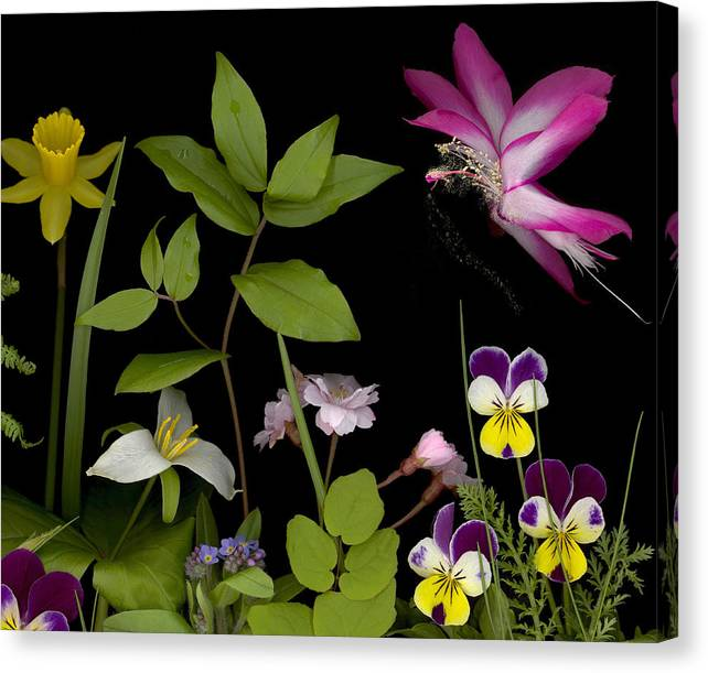 Spring Flowers Canvas Print featuring the photograph Fairy Dust by Sandi F Hutchins