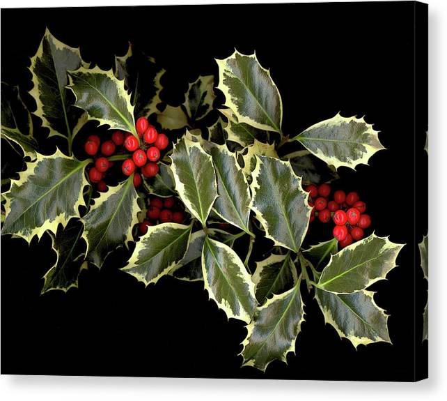 Canvas Print featuring the photograph Holly by Sandi F Hutchins
