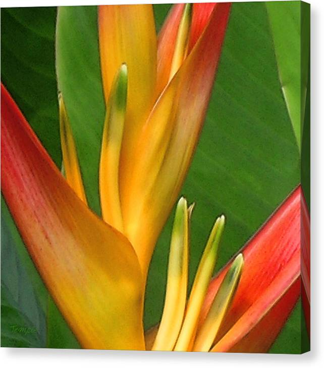 Heliconia Canvas Print featuring the photograph Hawaii Dreaming by James Temple