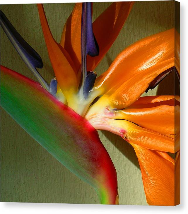 Bird Of Paradise Canvas Print featuring the photograph Paradise Morning by James Temple