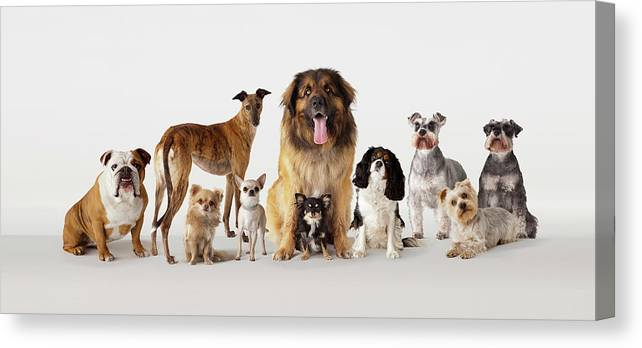 Pets Canvas Print featuring the photograph Group Portrait Of Dogs by Compassionate Eye Foundation/david Leahy