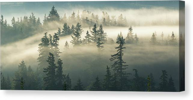 Fog Canvas Print featuring the photograph Castles In The Fog by Manju Shekhar