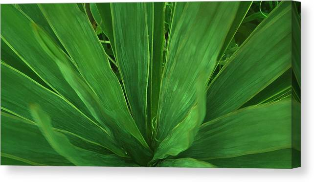 Green Plant Canvas Print featuring the photograph Green Glow by Linda Sannuti