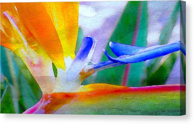 Natural High Canvas Print featuring the digital art Natural High by James Temple