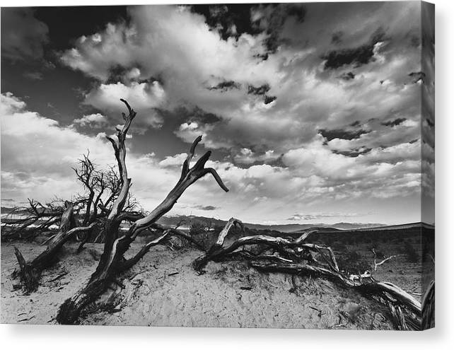 Landscape Canvas Print featuring the photograph Dead Trees at Mesquite Dunes by Nathan Spotts