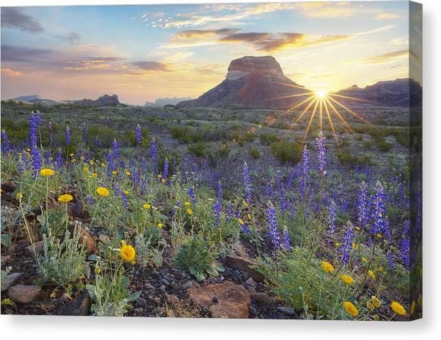 Sunrise over Big Bend Bluebonnets by Rob Greebon