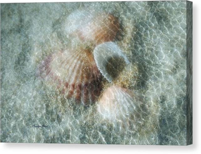 Shells Canvas Print featuring the photograph Step Lightly by Carolyn Staut
