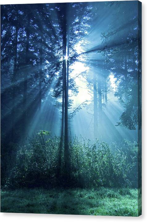 Limited Time Promotion: Magical Light Stretched Canvas Print