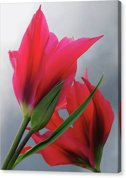Limited Time Promotion: Love Stretched Canvas Print