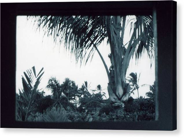 Palm Tree Canvas Print featuring the photograph Window To Paradise by Jennifer Ott