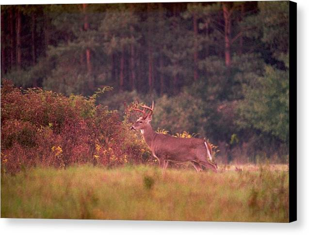 Deer Canvas Print featuring the photograph 070406-64a by Mike Davis