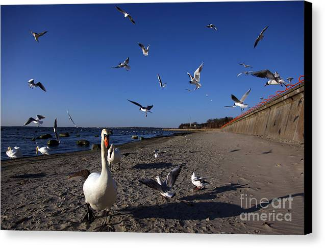 Sky Canvas Print featuring the photograph Walk by Vadim Grabbe