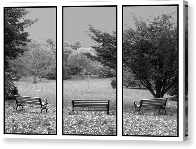 Nature Canvas Print featuring the digital art Bench View Triptic by Tom Romeo
