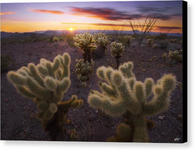 Kofa Mountains Canvas Print featuring the photograph Celebration by Peter Coskun