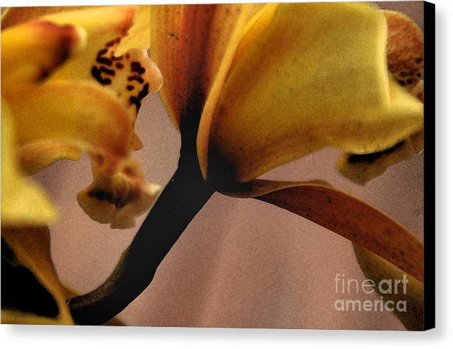 Orchid Canvas Print featuring the photograph Orchid Yellow by Michael Ziegler