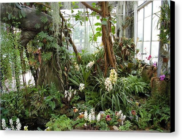Plants Canvas Print featuring the photograph Tropical Affair by Veron Miller