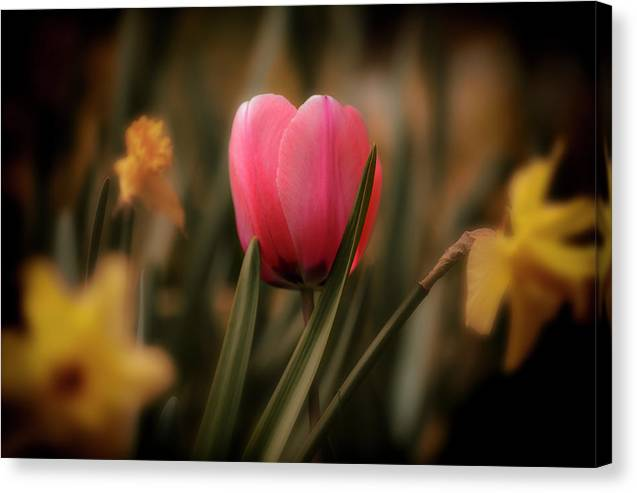 Us Canvas Print featuring the photograph Flowers 32 by Sandy Adams