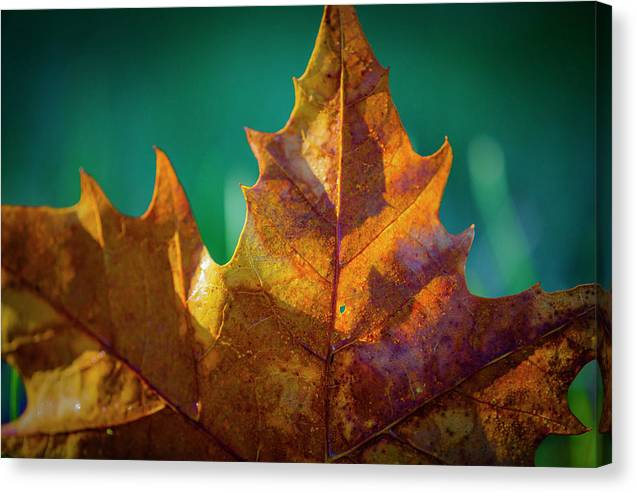 Fall Canvas Print featuring the photograph Leaves 971 by Sandy Adams