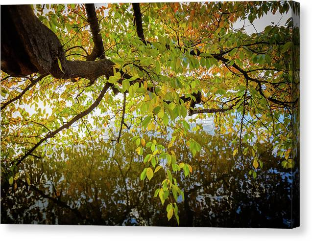 Landscapes Canvas Print featuring the photograph Trees 9684 by Sandy Adams