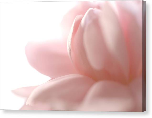 Pink Canvas Print featuring the photograph Flower Abstract by Jessica Wakefield