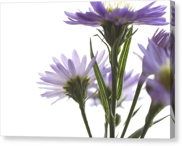 Flowers Canvas Print featuring the photograph Flower Abstract by Jessica Wakefield