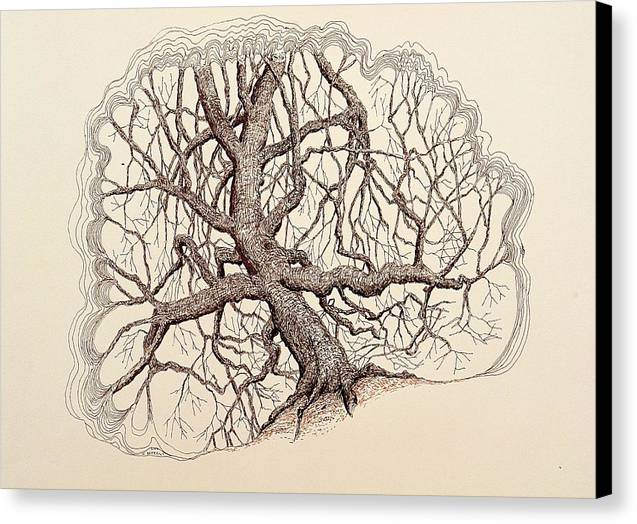 Tree Canvas Print featuring the drawing Tree In Winter II by Kerry Beverly