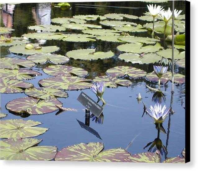 Lillies Canvas Print featuring the painting Longwood Lillies by Randy Ford