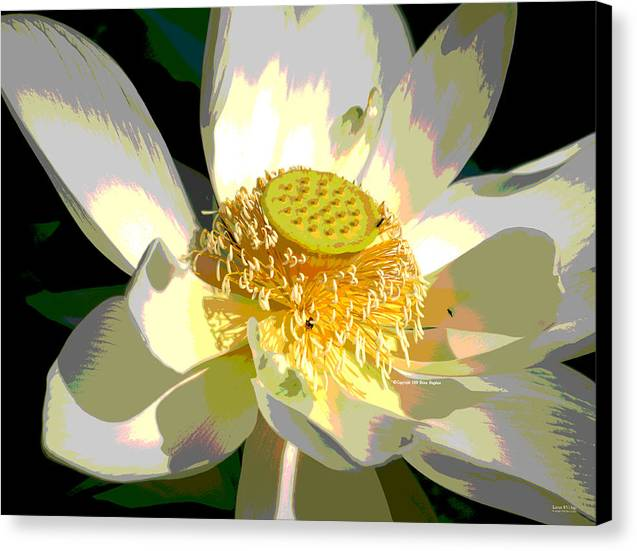 November Canvas Print featuring the photograph Lotus 8514dg Special by Brian Gryphon