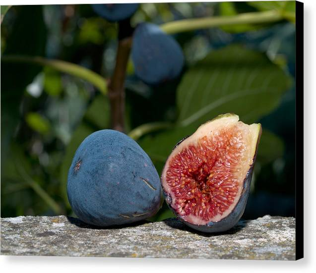 Fruit Canvas Print featuring the photograph Ripe Figs by Jim DeLillo