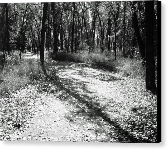 Landscape Canvas Print featuring the photograph Shadow Path by Allan McConnell