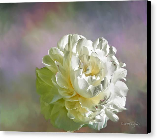 White Peony Canvas Print featuring the painting Lacy by Elzire S