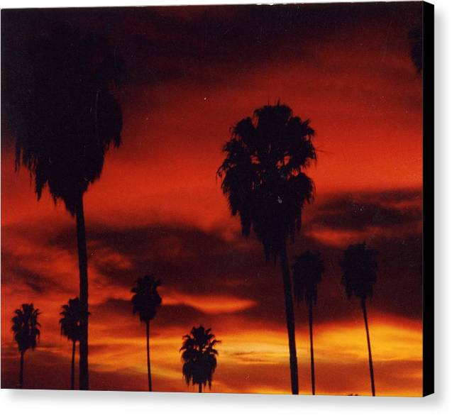 Palm Trees Canvas Print featuring the photograph Hollywood Sunset by Jennifer Ott