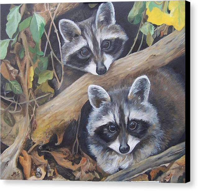 Raccoons Canvas Print featuring the painting Hidden Twins by Audrie Sumner