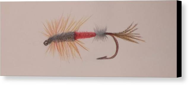 Trout Canvas Print featuring the drawing Dry Fly by Roy Penny