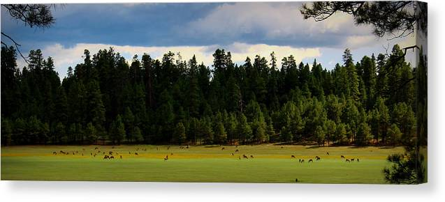 Arizona Canvas Print featuring the photograph Elk Grazing In The Meadow by Aaron Burrows
