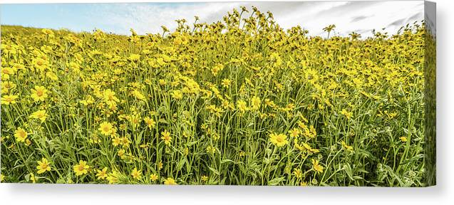 Photography Canvas Print featuring the photograph Wildflowers In A Field, Carrizo Plain by Panoramic Images