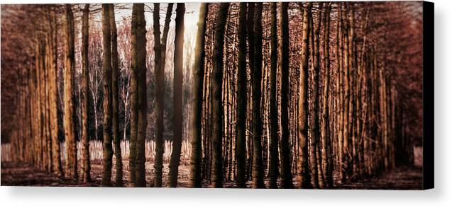 Trees Canvas Print featuring the photograph Trees Gathering by Wim Lanclus