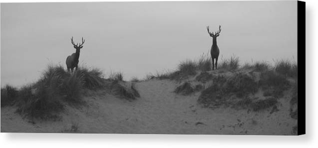 Elk Canvas Print featuring the photograph Elk At Dawn by Angi Parks