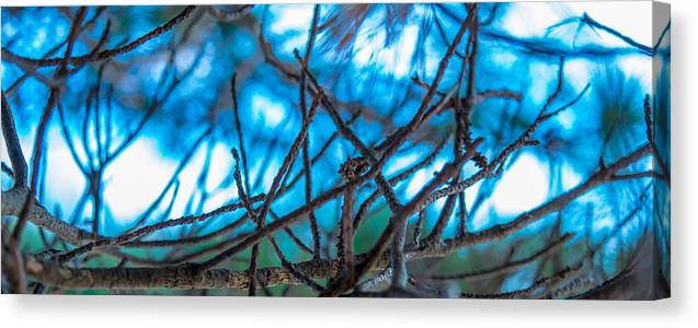 Abstract Canvas Print featuring the digital art Branches 23 by Daniel DeLucia