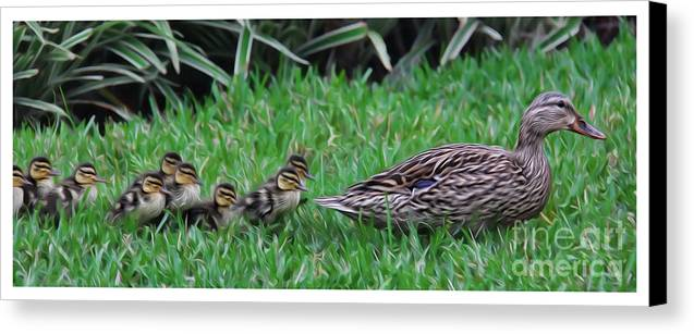 Make Way For The Ducklings Canvas Print featuring the photograph Following Mommy by Lee Dos Santos